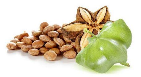 L'EFSA non favorable à la mise sur le marché de graines toastées de Sacha Inchi