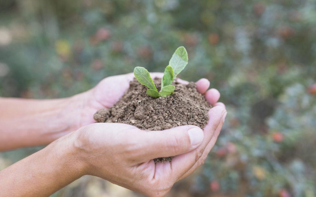 Plante et mains