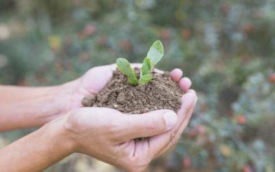 Recommandations nutritionnelles  & impact sur l'environnement